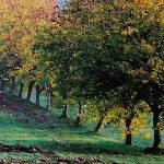 Herbst im Agrarland