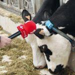 Reporterin hält Kühen ein Mikrofon hin