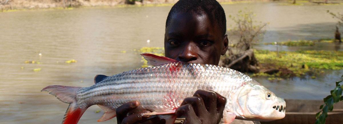 Bub hält Fisch in den Händen