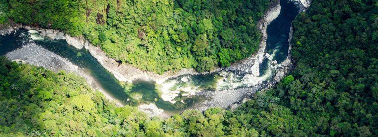 Wald mit Fluss von oben