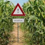 Factsheet (Oktober 2019): Vorsicht Nährstofflücke! Keine Nährstoffe im Boden, kein Essen am Teller