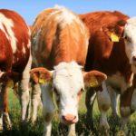 Fachtag Grünland- und Viehwirtschaft 28.01.2021