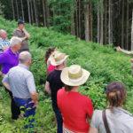 Kärnten: Klimafitter Wald – zum Anschauen und Nachmachen
