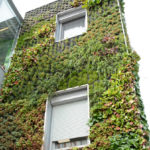 Steiermark: Dach- und Fassadenbegrünung des Rathauses