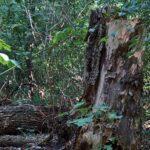 Wo Bäume in Pension geschickt werden und Umweltschutz schon in der Wiege beginnt
