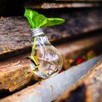 Die BLOOM Schulbox: Lernszenarien für den Unterricht