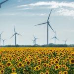 Windräder und Sonnenblumen